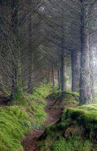 Scotland Forest