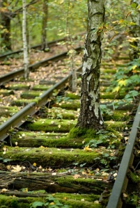 Tree on tracks