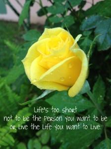 Yellow Rose-001