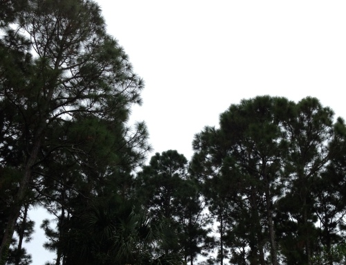 Grey sky with trees 01