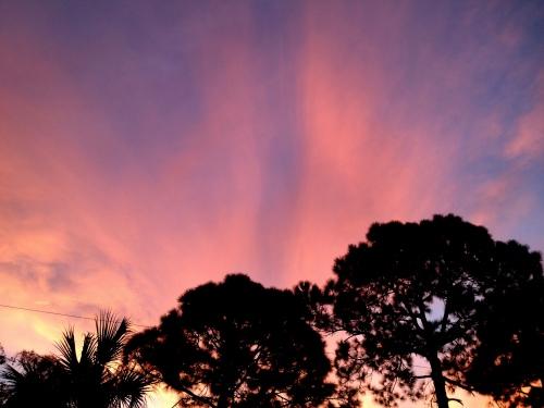 Pink morning 02