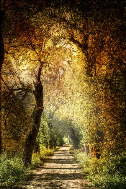 From Pinterest: Mystic path. Sendero místico.  by Zú Sánchez. on Flickr